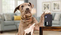 Interact with Your Pets from anywhere